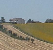 Serenella fattoria